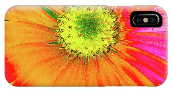 Pop Art Osteospermum 2 IPhone Case