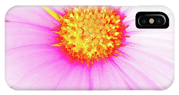 Pop Art Osteospermum 3 IPhone Case