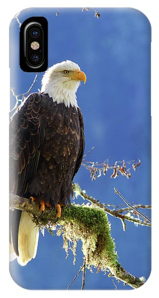 Portrait Of A Backlit Bald Eagle In Squamish IPhone Case