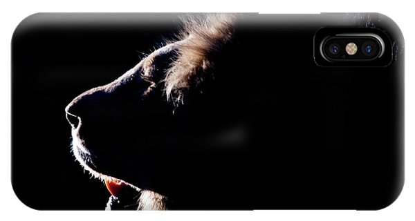 Portrait Of A Backlit Male African Lion IPhone Case