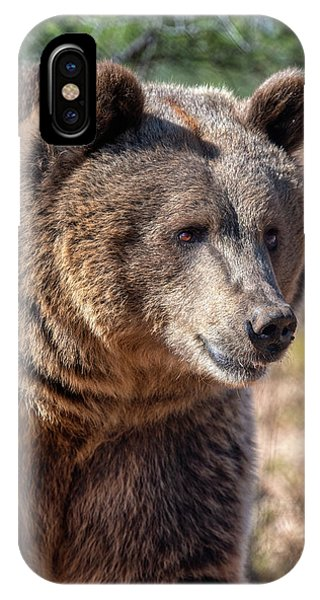 Portrait Of A Female Grizzly Bear IPhone Case