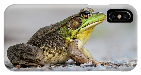 Portrait Of A Green Frog IPhone Case