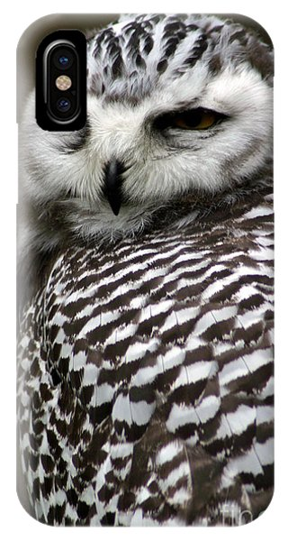 Plumes iPhone Case - Portrait Of A Majestic Spotted Owl by Paul Banton