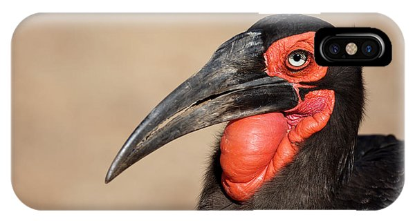Horn iPhone Case - Portrait Of A Southern Ground Hornbill by Johan Swanepoel