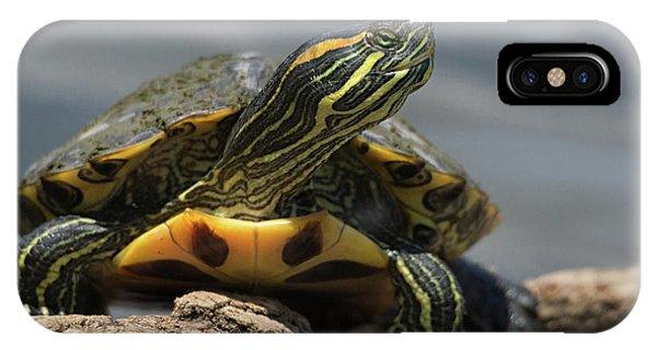 Portrait Of A Turtle IPhone Case