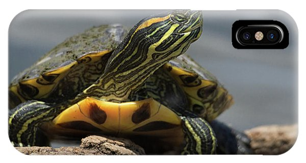 Portrait Of A Turtle IPhone Case