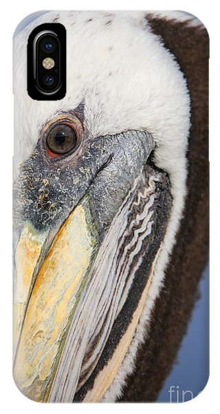 Adult iPhone Case - Portrait Of Brown Pelican Pelecanus by Don Mammoser