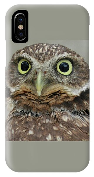Portrait Of Burrowing Owl IPhone Case