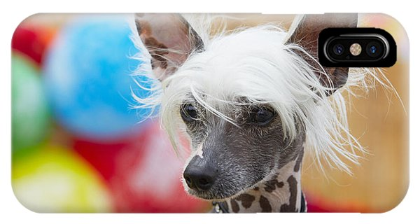 Purebred iPhone Case - Portrait Of Chinese Crested Dog - Copy by Jaromir Chalabala