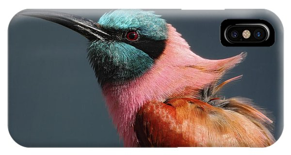 Bee iPhone X Case - Portrait Of Pink Northern Carmine by Ondrej Prosicky