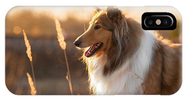 Purebred iPhone Case - Portrait Of Rough Collie At Sunset by Grigorita Ko