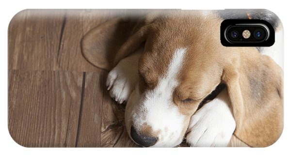 Purebred iPhone Case - Portrait Of Young Beagle Dog Lying On by Champiofoto