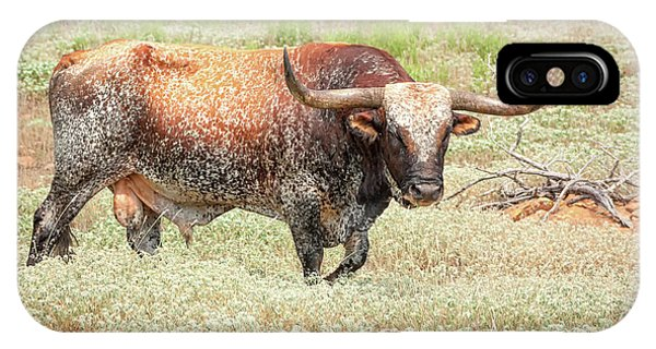 Prairie Longhorn IPhone Case