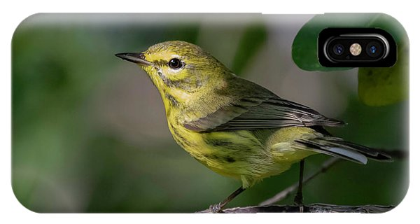 Prairie Warbler IPhone Case