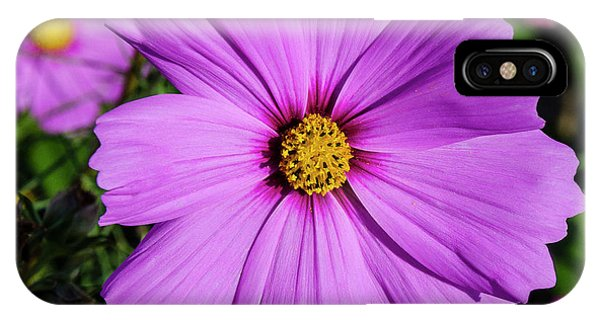 Lovely In Lavender IPhone Case