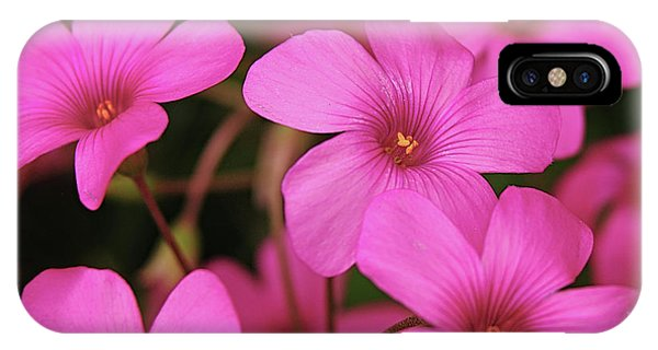 Pretty Pink Phlox IPhone Case