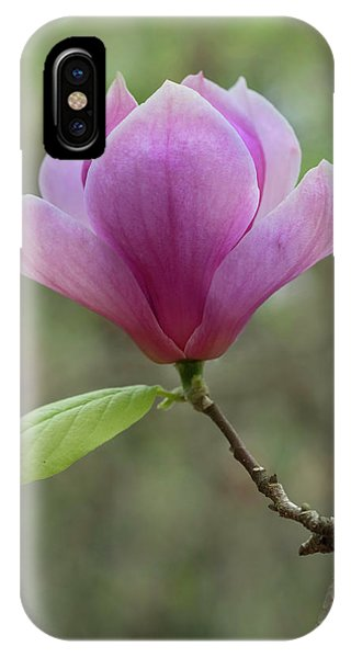 iPhone Case - Pretty Soulange Magnolia by Jaroslaw Blaminsky