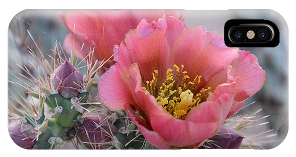 Botany iPhone Case - Prickly Pear Cactus With Pink Flowers by Jerry Horbert