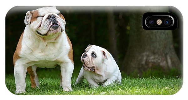 Purebred iPhone Case - Puppy And Adult Dog Playing Outside - by Willeecole Photography