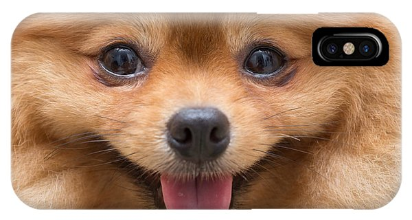 Pomeranian iPhone Case - Puppy Pomeranian Dog Cute Pets In Home by Suti Stock Photo