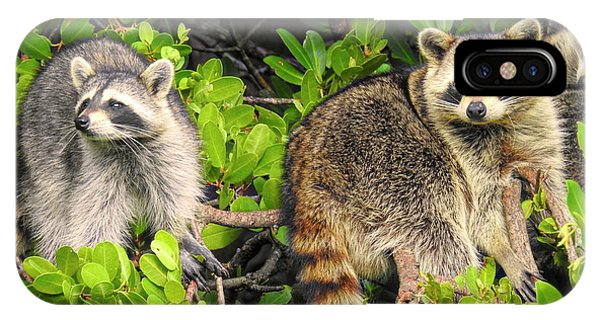 Raccoons In The Mangroves IPhone Case