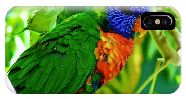 IPhone Case featuring the photograph Rainbow Lorikeet by Dan Miller