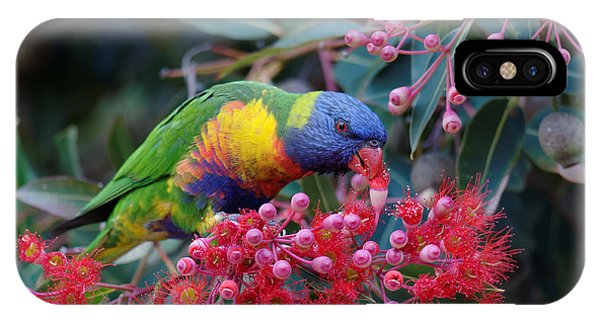 Parrots iPhone Case - Rainbow Lorikeet Eating The Nectar From by Jun Zhang