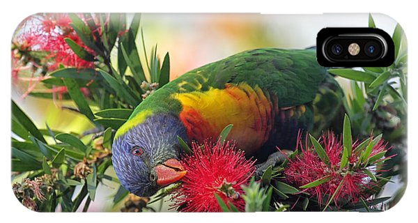 Eating iPhone Case - Rainbow Lorikeet Trichoglossus by Dirkr
