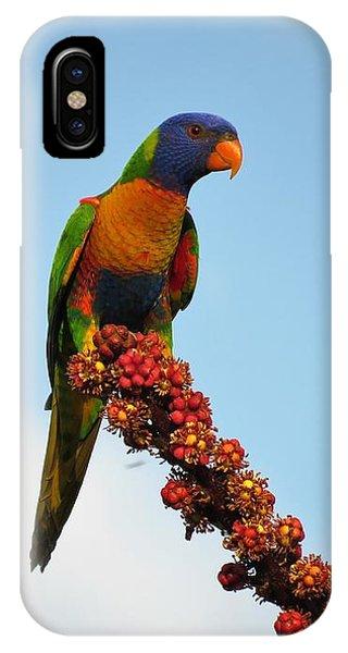 Rainbow Lorikeet Umbrella Tree Flowers IPhone Case