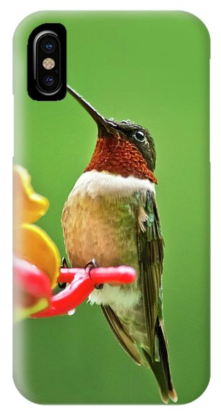 Humming Bird iPhone Case - Rainy Day Hummingbird by Christina Rollo