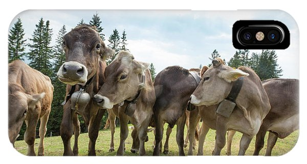 Rambunctious Swiss Cows With Cow Bells Phone Case by Guy Midkiff