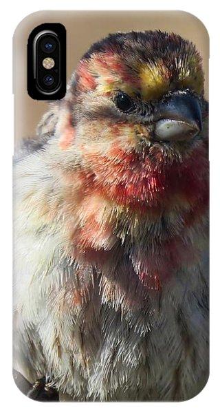 Rare Multicolored Male House Finch IPhone Case