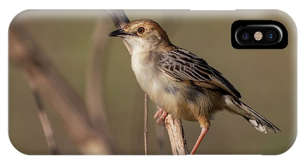Rattling Cisticola IPhone Case