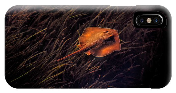 Ray In The Grass Flats IPhone Case