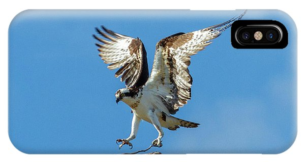 Ospreys iPhone Case - Reaching For Home by Mike Dawson