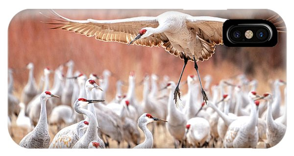 Ready Or Not, Here I Come -- Sandhill Cranes IPhone Case