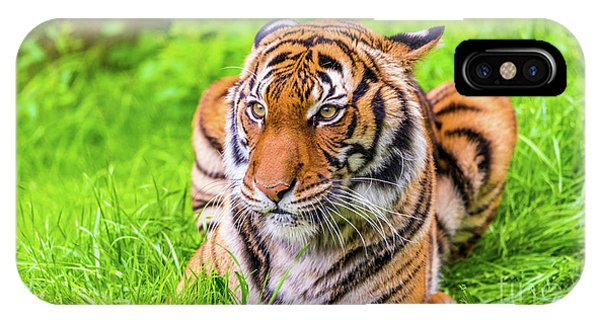 IPhone Case featuring the photograph Ready To Pounce by Dheeraj Mutha