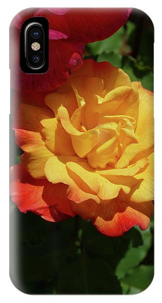 Red And Yellow Rio Samba Roses IPhone Case