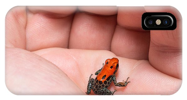 South America iPhone Case - Red-backed Poison Frog, Ranitomeya by Christian Vinces