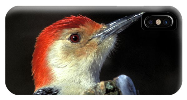IPhone Case featuring the photograph Red Bellied Woodpecker by Jeff Phillippi