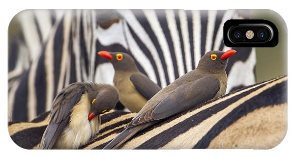 Buffalo Bill iPhone X Case - Red-billed Buffalo-weaver In Kruger by Paco Como