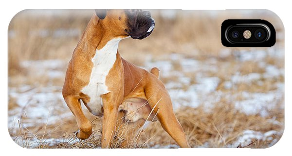 Purebred iPhone Case - Red Boxer Dog Standing Outdoors by Otsphoto