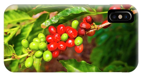 Red Coffee Cherries On The Vine Phone Case by Russ Bishop