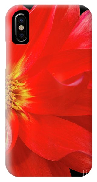 Red Dahlia On Black Background IPhone Case