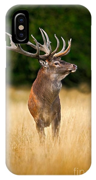 Stag iPhone Case - Red Deer Stag, Majestic Powerful Adult by Ondrej Prosicky