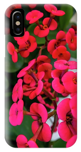 Red Flowers In Bloom IPhone Case