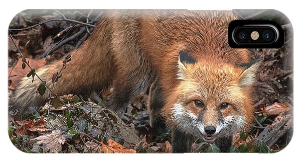 IPhone Case featuring the photograph Red Fox Dmam0049 by Gerry Gantt