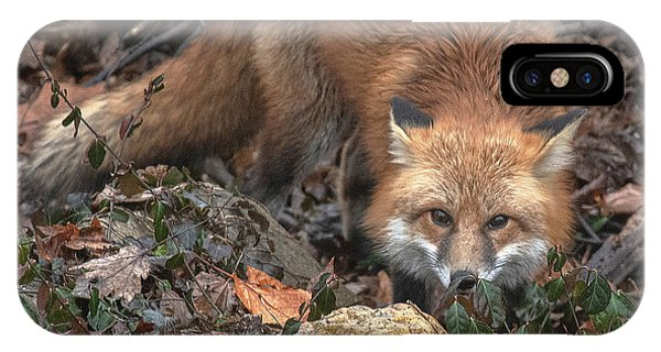 IPhone Case featuring the photograph Red Fox Dmam0050 by Gerry Gantt