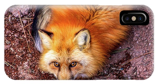 Red Fox In Canyon, Arizona IPhone Case