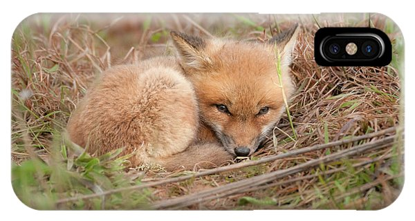 Red Fox Kit - Resting IPhone Case